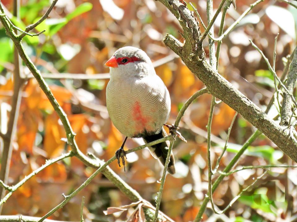 Emily Moon birding weekend-2